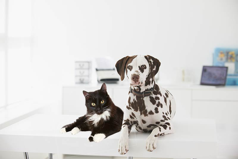 Dog and Cat in Salon